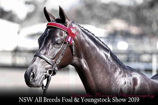 NSW All Breeds Foal & Youngstock 2019
